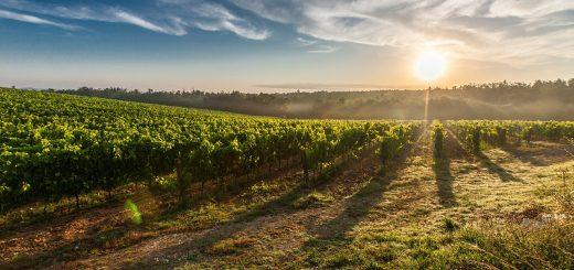 Umíte si užít dobré víno? Vyzkoušejte to s námi!